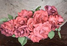Rosas clásicas de la tarjeta del día de San Valentín Imagen de archivo