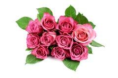 Rosas coloreadas Imágenes de archivo libres de regalías