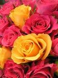 Rosas coloreadas brillantes Foto de archivo libre de regalías
