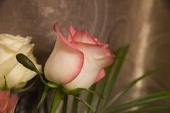 Rosas coloreadas en foco Imagen de archivo libre de regalías