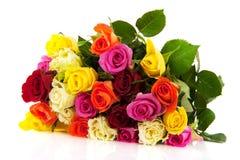 Rosas coloridas imagens de stock royalty free