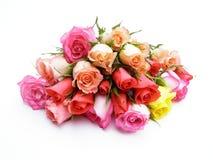Rosas coloridas fotografía de archivo libre de regalías