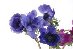Rosas coloridas Imagem de Stock Royalty Free