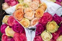 Rosas coloridas imagens de stock