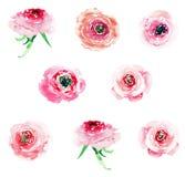Rosas coloridas dos wildflowers da mola erval floral bonita maravilhosa sofisticada elegante macia com grupo dos botões ilustração royalty free