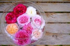 Rosas coloridas en el florero de cristal Imagen de archivo