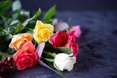 Rosas coloridas en fondo gris/negro, con el espacio de la copia foto de archivo libre de regalías