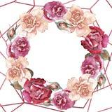 Rosas coloridas Flor botânica floral Quadrado do ornamento da beira do quadro ilustração stock