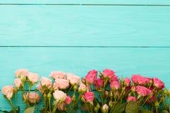 Rosas coloridas no fundo de madeira azul Fotos de Stock Royalty Free