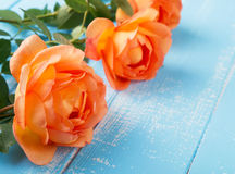 Rosas coloridas pêssego na tabela Fotos de Stock Royalty Free