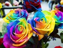 Rosas coloridos e originais do arco-íris foto de stock