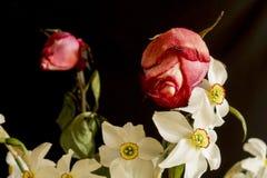 Rosas com narcis Imagens de Stock Royalty Free
