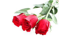 Rosas com uma nota Fotografia de Stock Royalty Free