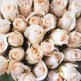 Rosas como um fundo Fotografia de Stock
