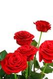 Rosas con el espacio de la copia Imagen de archivo libre de regalías