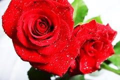 Rosas con gotas Fotos de archivo libres de regalías