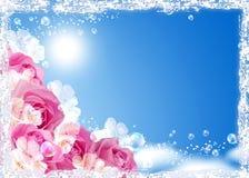 Rosas contra el cielo Imagen de archivo libre de regalías