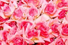 Rosas cor-de-rosa Foto de Stock
