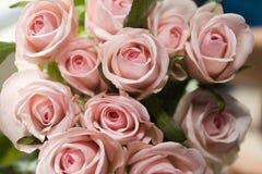 Rosas cor-de-rosa Imagem de Stock Royalty Free