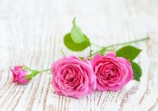 Rosas cor-de-rosa fotografia de stock royalty free