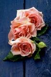 Rosas cor-de-rosa Imagem de Stock
