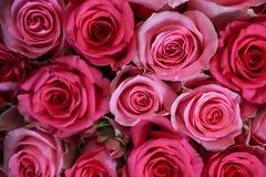 Rosas cor-de-rosa bonitas fotografia de stock royalty free