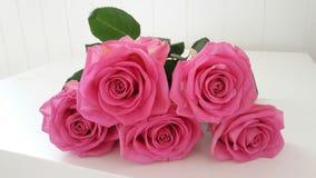 Rosas cor-de-rosa bonitas Imagens de Stock Royalty Free