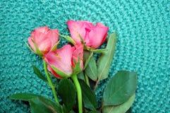 Rosas cor-de-rosa bonitas Fotografia de Stock