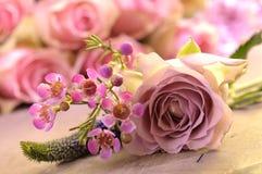 Rosas cor-de-rosa de florescência Fotografia de Stock Royalty Free