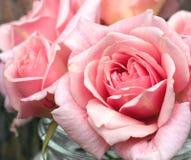 Rosas cor-de-rosa delicadas Fotos de Stock