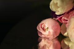 Rosas cor-de-rosa delicadas Imagem de Stock