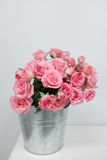 Rosas cor-de-rosa do arbusto em uma cubeta Imagem de Stock