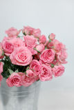 Rosas cor-de-rosa do arbusto em uma cubeta Imagens de Stock