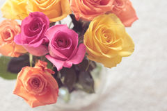 Rosas cor-de-rosa e amarelas Fotografia de Stock Royalty Free