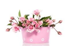 Rosas cor-de-rosa em um flowerpot cor-de-rosa Foto de Stock Royalty Free