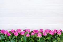 Rosas cor-de-rosa em um fundo branco Fotos de Stock Royalty Free