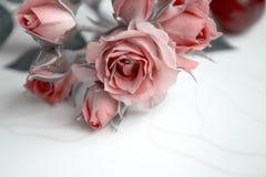 Rosas cor-de-rosa Flores Use materiais impressos, sinais, artigos, Web site, mapas, cartazes, cartão, empacotando Cartão com a pa Fotografia de Stock Royalty Free