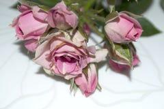 Rosas cor-de-rosa Flores Use materiais impressos, sinais, artigos, Web site, mapas, cartazes, cartão, empacotando Cartão com a pa Imagens de Stock Royalty Free