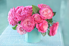 Rosas cor-de-rosa frescas bonitas Imagem de Stock