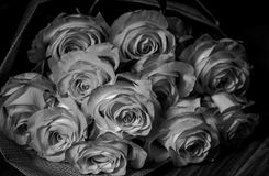 Rosas cor-de-rosa frescas bonitas fotografia de stock