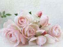 Rosas cor-de-rosa isoladas no fundo branco Aperfeiçoe para o fundo foto de stock