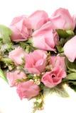 Rosas cor-de-rosa macias Foto de Stock