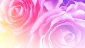 Rosas cor-de-rosa macias artificiais com o filtro de cor do borrão como o fundo Imagem de Stock