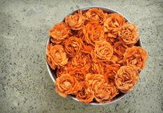 Rosas cor-de-rosa na bacia Fotos de Stock Royalty Free