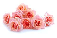Rosas cor-de-rosa no branco fotografia de stock royalty free