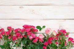 Rosas cor-de-rosa no branco Foto de Stock
