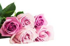 Rosas cor-de-rosa no fundo branco Imagem de Stock Royalty Free
