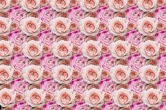 Rosas cor-de-rosa para o fundo Muitas rosas como um fundo floral Fotografia de Stock