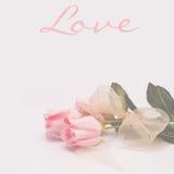 Rosas cor-de-rosa românticas e ideais - AMOR Imagens de Stock Royalty Free