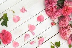 Rosas cor-de-rosa românticas no fundo de madeira branco fotografia de stock royalty free